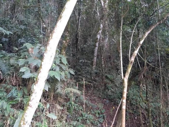 Venda De Sítio No Rural Pinhal Em São Thomé Das Letras-MG